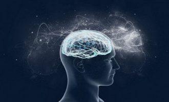 Βρέθηκαν πάνω από 500 γονίδια που συνδέονται με την ανθρώπινη νοημοσύνη