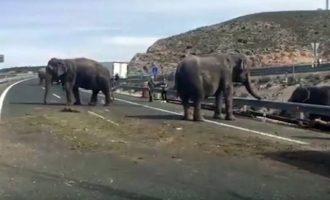 Απίστευτο: Ελέφαντες βγαίνουν σε αυτοκινητόδρομο στην Ισπανία και δημιουργούν χάος (βίντεο)