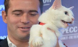 O κουφός γάτος Αχιλλέας επίσημος «μάντης» του Μουντιάλ 2018