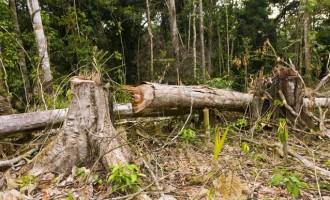 Ο Αμαζόνιος εκπέμπει S.O.S.: Κατά 28% αυξήθηκε η αποψίλωση του τροπικού δάσους