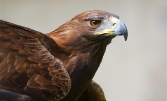 Πρόστιμο 1 εκ. δολάρια σε όμιλο αιολικών για το θάνατο αετών