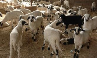 Εταιρεία «βάφτιζε» κρέατα από τη Ρουμανία ως «ελληνικά»