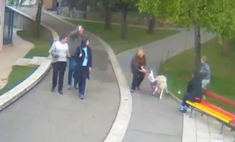 Σοκ: Λύκος επιτέθηκε σε δίχρονο κοριτσάκι σε ζωολογικό κήπο (βίντεο)