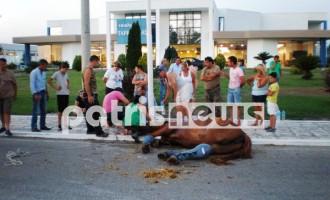Τραυματισμός αλόγου στην εθνική οδό
