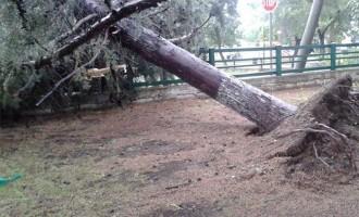 Πλημμυρισμένοι δρόμοι και ξεριζωμένα δέντρα στην Κοζάνη από την κακοκαιρία (εικόνες-βίντεο)