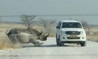 Ρινόκερος επιτέθηκε σε τουρίστες στη Ναμίμπια (βίντεο)