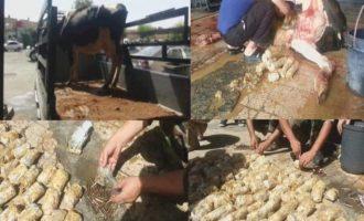 Τζιχαντιστές είχαν γεμίσει την κοιλιά ζωντανής αγελάδας με λαθραίες σφαίρες (βίντεο)