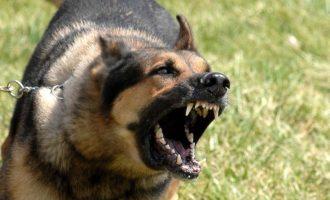 Σκύλος επιτέθηκε σε νεαρό στις Μυκήνες και τον τραυμάτισε στο πρόσωπο