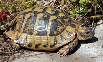 Απίστευτο: Γιατί οι χελώνες κρύβουν το κεφάλι τους στο καβούκι