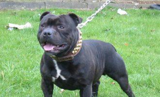 Αίγιο: Σκύλος δάγκωσε περαστικό και σκότωσε το σκυλί του