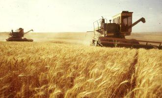 Νέα ποικιλία τροποποιημένου σιταριού θα αυξήσει την παραγωγή μέχρι και 12%