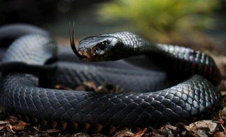 Άνδρας δάγκωσε φίδι στην Ινδία και το σκότωσε