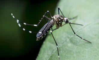 Αυξάνονται οι νεκροί από τον ιό του Δυτικού Νείλου – Tέσσερις θάνατοι σε μια εβδομάδα