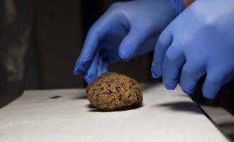 Ισπανία: Βρέθηκαν φυσικά  διατηρημένοι εγκέφαλοι σε μαζικό τάφο από τον εμφύλιο πριν 80 χρόνια