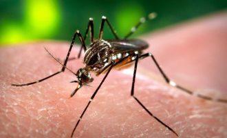 Τέσσερις θάνατοι στην Ελλάδα από τον ιό του Δυτικού Νείλου