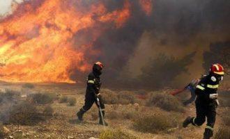Καίγεται η Πελοπόννησος: Σε εξέλιξη τρεις πυρκαγιές στην Ηλεία και μία στην Αρκαδία