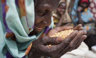 Έκθεση ΟΗΕ: Κίνδυνος «έκρηξης» του υποσιτισμού λόγω κορωνοϊού