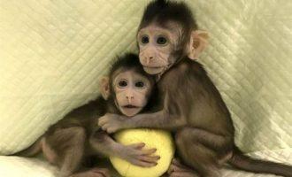 Επιστήμονες κλωνοποίησαν μαϊμού για πρώτη φορά – Επόμενο βήμα ο άνθρωπος (φωτο)