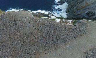 1,5 εκατ. πιγκουίνοι ήταν κρυμμένοι στην Ανταρκτική από το 1959 (βίντεο)