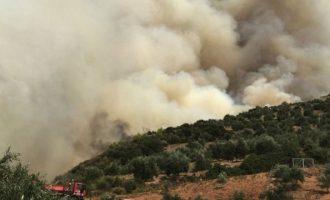 Ισχυρές πυροσβεστικές δυνάμεις στο μέτωπο της πυρκαγιάς στην Ηλεία