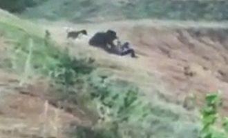 Αρκούδα κατασπάραξε Ινδό που προσπάθησε να βγάλει σέλφι μαζί της (βίντεο)