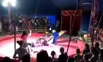 Σκηνές τρόμου στη Ρωσία: Εξαγριωμένη αρκούδα επιτέθηκε σε θηριοδαμαστή (βίντεο)