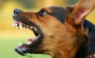 Σκύλος επιτέθηκε σε 11χρονο – Εξαφανίστηκε η ιδιοκτήτριά του