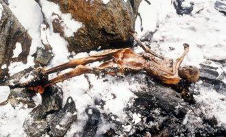 Τι έφαγε πριν πεθάνει ο Ότζι ο Άνθρωπος των Πάγων ηλικίας 5.300 ετών