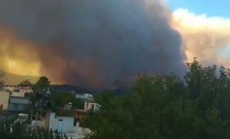 Όλη η δύναμη της Πυροσβεστικής Εύβοιας στη μάχη για την κατάσβεση της πυρκαγιάς (βιντεο)