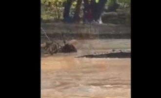 Η στιγμή της διάσωσης του 27χρονου από το χείμαρρο στην Εύβοια (βίντεο)