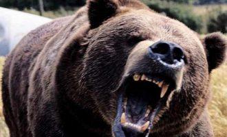 Φρίκη στον Καναδά: Αρκούδα σκότωσε 37χρονη και τη 10 μηνών κόρη της