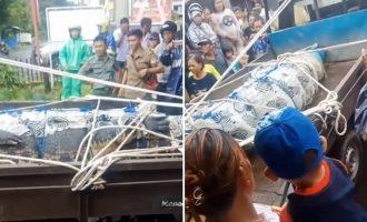 Φρίκη στην Ινδονησία: Κροκόδειλος έφαγε ζωντανή 44χρονη την ώρα που τον τάιζε