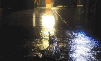 Πώς βγήκαν κροκόδειλοι στους δρόμους μετά από πλημμύρες στην Αυστραλία (βίντεο)
