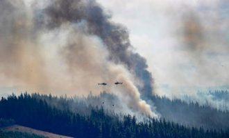 Κίνδυνος να καίει για εβδομάδες η πρωτοφανής δασική πυρκαγιά στη Νέα Ζηλανδία