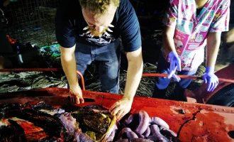 Φάλαινα πέθανε αφού κατάπιε 40 κιλά πλαστικές σακούλες