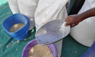 Δύο νεκροί στην Ουγκάντα από δημητριακά που χορήγησε ο ΟΗΕ