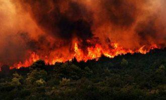 Συναγερμός στη Ζάκυνθο: Εκτός ελέγχου η μεγάλη πυρκαγιά -Κάηκε σπίτι