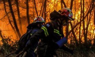 Καίγεται το πευκοδάσος Natura στην Εύβοια – Καπνοί σκέπασαν την Αττική