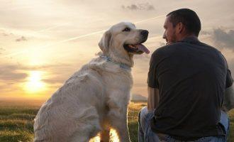 Λάθος η άποψη ότι ένας σκυλίσιος χρόνος ισοδυναμεί με επτά ανθρώπινα χρόνια – Ποια η ορθή αντιστοιχία