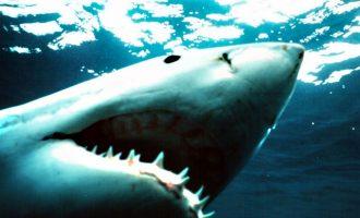 Καρχαρίας άρπαξε 10χρονο από σκάφος