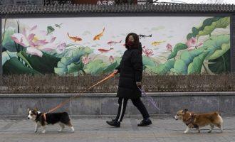 Βρέθηκε και σκύλος θετικός στον κοροναϊό – Τι λένε οι επιστήμονες
