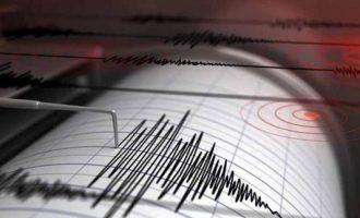 Γερμανοί επιστήμονες: Ορισμένα ζώα διαθέτουν μία έκτη αίσθηση που νιώθει από πριν τους σεισμούς