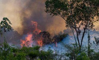 Περισσότερες πυρκαγιές συνεχίζουν να καταστρέφουν τον Αμαζόνιο