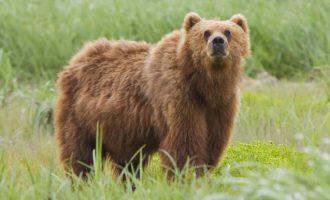 Πρωτοφανές στη Σλοβακία: Αρκούδα σκότωσε 57χρονο