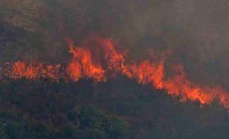 Φωτιά στην Εύβοια: Κοντά στο χωριό Θύμη Καρύστου οι φλόγες